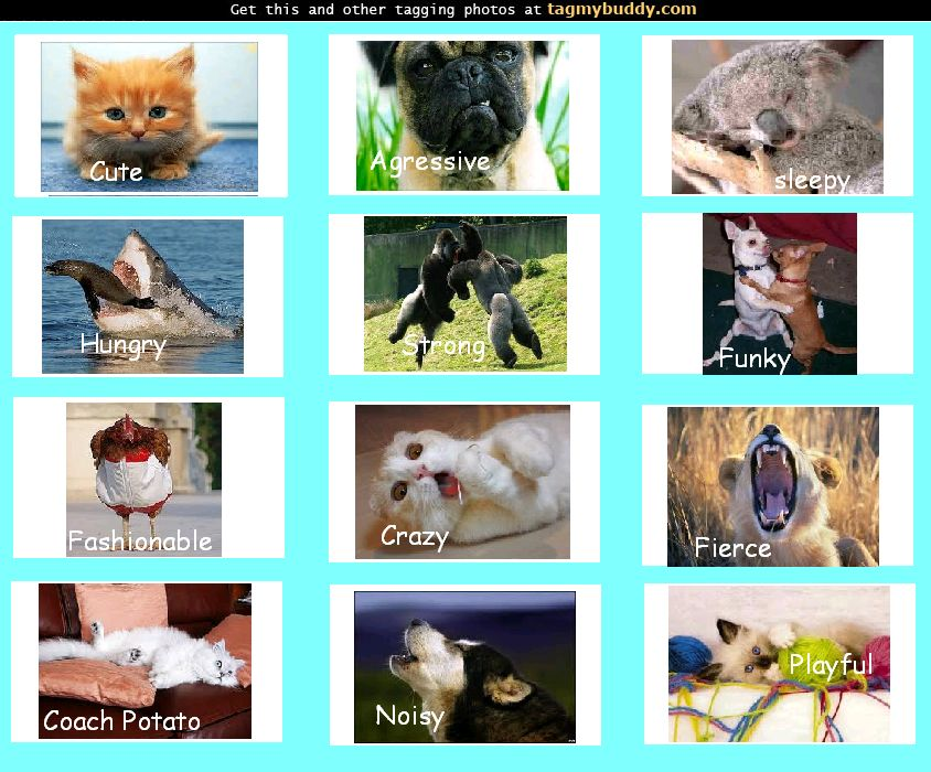 If You Were An Animal, Which One Would You Be?